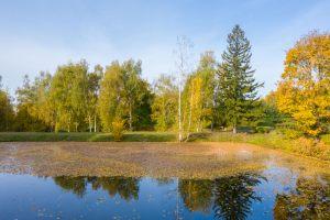 Болдинская осень. Усадьба Пушкина. Нижний пруд. Красивые осенние фото
