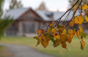Желтые осенние листья. Усадьба Пушкина. Болдинская осень