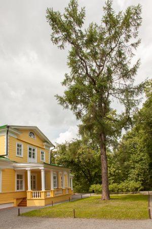 Усадьба А.С.Пушкина в Болдино. Господский дом и лиственница